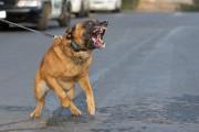 Einzelnes Hundeverbot am Arbeitsplatz nur mit sachlicher Begründung
