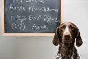 Hunde zählen nicht als Arbeitsmittel für Lehrer