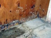 Mietminderung wegen feuchtem Keller und Taubenflug?