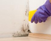 Schimmelpilze in Wohnung: Kann Mieter einstweilige Verfügung erwirken?