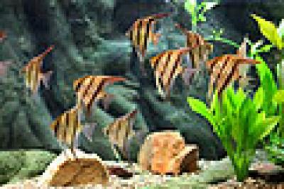 1 000 Liter Aquarium Kein Ersatz Fur Fischsterben Wegen Behandelter