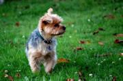 Anonyme Beschwerde führt nicht zum Hundeleinenzwang