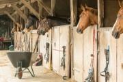 Bewohner am Ortsrand müssen benachbarte Pferdeställe akzeptieren