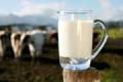 BGH: Greenpeace darf Milchprodukte als