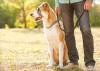 Gemeinsame Nutzung von Rollator und Blindenführhund für Blinde
