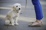 Kein ganzjähriges Hundeverbot an