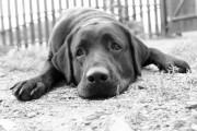 Kein Schmerzensgeld nach Unfalltod eines Hundes