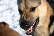 Schlichtung einer Hundebeißerei lohnt sich nicht