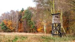 Wald und Forst (© Maciej Bledowski - Fotolia.com)