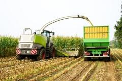 Silomaisernte in der Landwirtschaft (© Countrypixel - Fotolia.com)