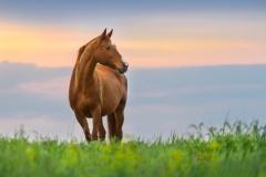 Pferd auf der Weide (© Inge Knol - Fotolia.com)