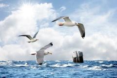 Möwen auf See (© Butch - Fotolia.com)